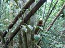 Das es wirklich Bambus ist zeigt das hohle Rohr